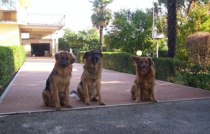 Naši psi čuvari